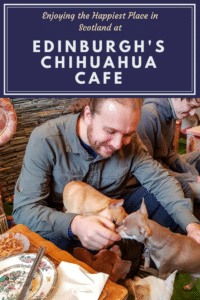 Pin - Edinburgh's Chhuahua Cafe #2